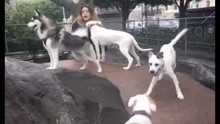 LIVE: Adopted Dogs Play At NYC Park for the First Time | The Dodo