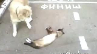 Anjing mengira kucing mati di tengah jalan