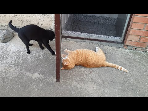 Cats Playing Behind The Door