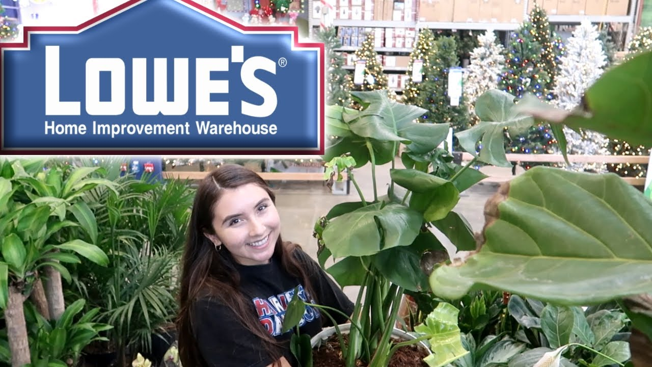 All The Houseplants At Lowes Youtube