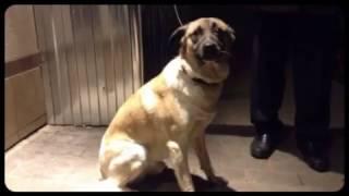 Найдена собака! 24 Октября, 2014 /Песик дома/