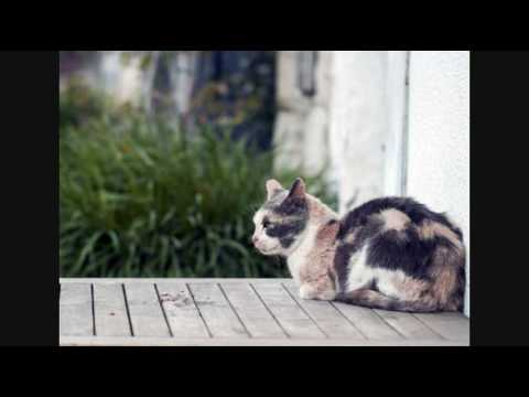 care-for-cats---skin-mite-dermatitis-in-cats---cat-tips