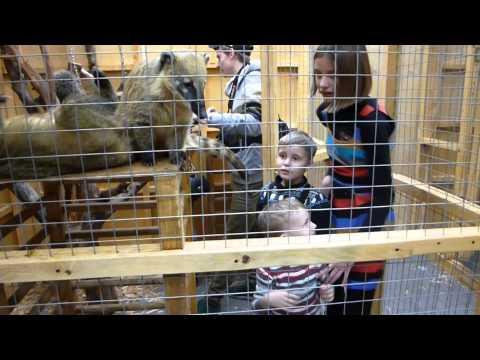 2015_03_29 - ручной зоопарк
