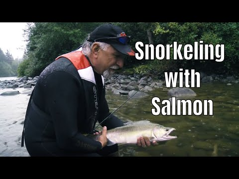 Anglers Snorkel With Thousands Of Salmon: Then Catch Em' | Fish'n Canada