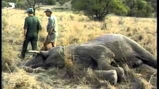60 Minutes - Rogue Elephants