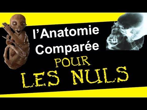 L'anatomie pour les nuls avec des Aliens