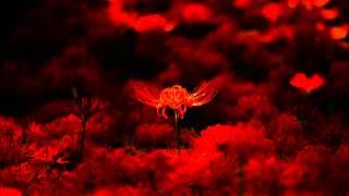 ピアソラ: 天使のミロンガ[ナクソス・クラシック・キュレーション #切...