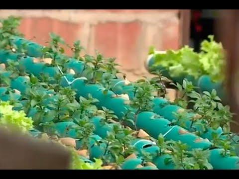 La Red Urbana Que Convierte En Prósperos Cultivos Las Terrazas De Casas De Barrios Populares
