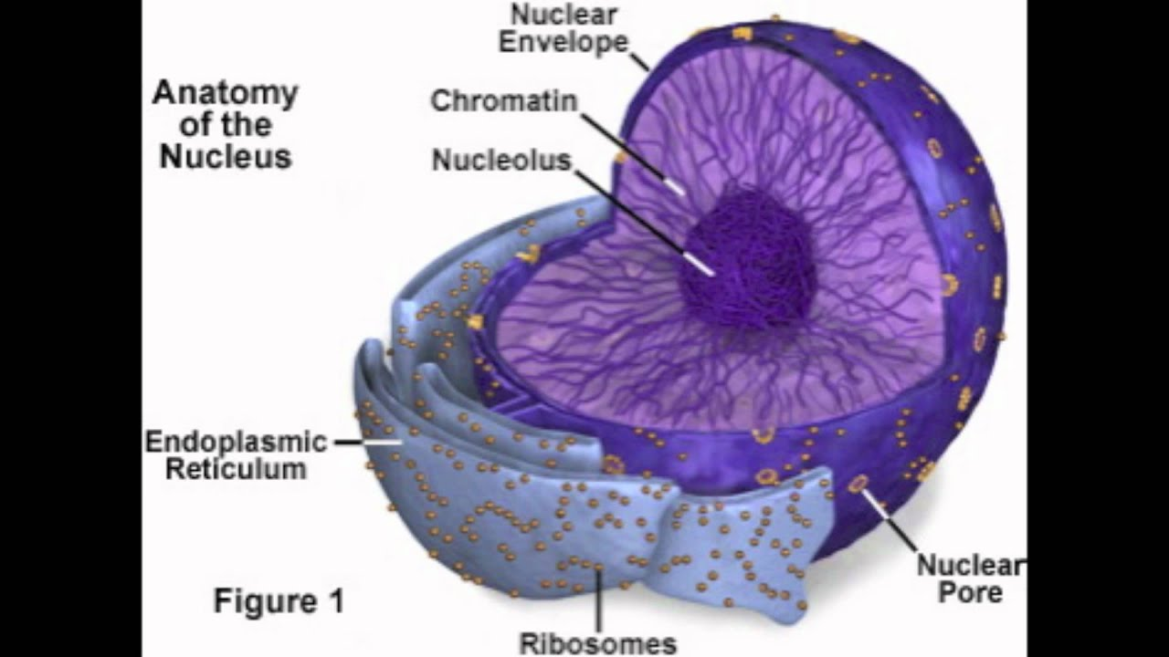 Animal Plant Cell Diagram Biology This Is A