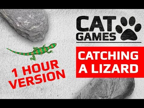 CAT GAMES - CATCHING A LIZARD 1 HOUR VERSION (ENTERTAINMENT VIDEOS FOR CATS TO WATCH)