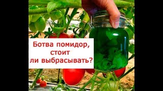 Ботва помидоров, стоит ли выбрасывать  22 народных рецепта лечения ботвой томатов