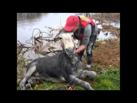 A &39;Smiling&39; Donkey Has Been Rescued From Floods In Ireland