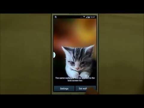 Sleepy Kitten Live Wallpaper for Android