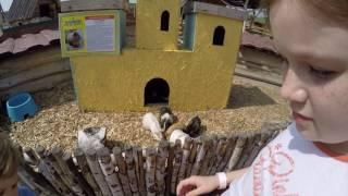 Дети в зоопарке кормят зверей! ))) / Зоопарк Ривьера г.Казань