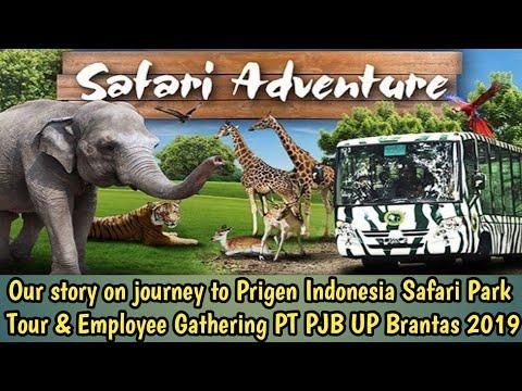 Review Taman Safari Indonesia Prigen | Baobab Safari Resort | Family Gathering PT PJB UP Bantas 2019