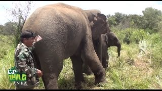 Injured Mother elephant !