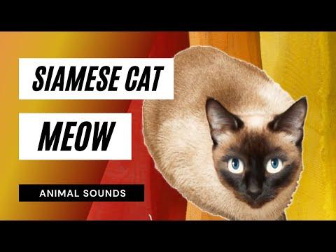 3d cat games