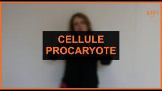 Biologie - Cellule procaryote
