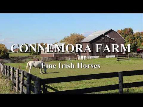Irish horses for sale in Canada