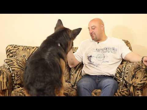 هشام جلال وماكس 'جيرمن شيبرد' - كلبك علي ما تربيه