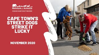 Cape Town Street Dogs Strike It Lucky Thanks to Network for Animals