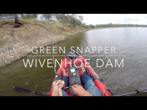 Wivenhoe Tilapia Fishing On Dragon Kayaks