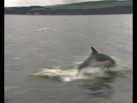 Dolphins up close off the Northern Ireland coast