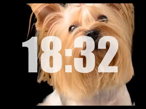 Dogs 20 Minute Timer No Music and 🐶🐶🐶 Alarm