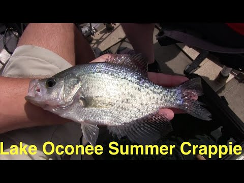 Lake Oconee Summer Crappie Fishing