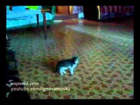 kitten vs a scary thing (котенок против страшной неведомой хрени)