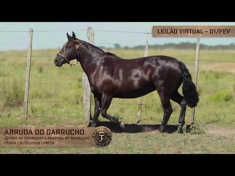Lote 01 - Arruda do Garrucho