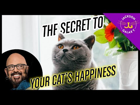 THE Secret to Your Cats Happiness