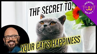 Basecamp THE Secret to Your Cat's Happiness