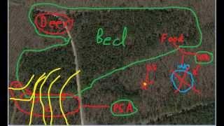 Understanding Buck Scrapes