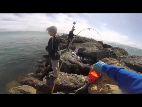 Mackerel and smelt fishing California 3/13/16