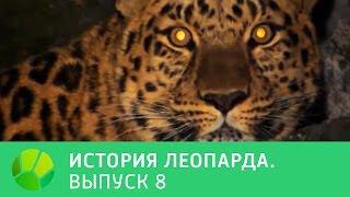 История леопарда  Выпуск 8 | Живая Планета