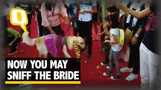 the quint when dogs marry who hides the jootas