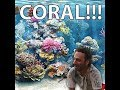 Capture de la vidéo Coral Documentary With  Rick Grimes
