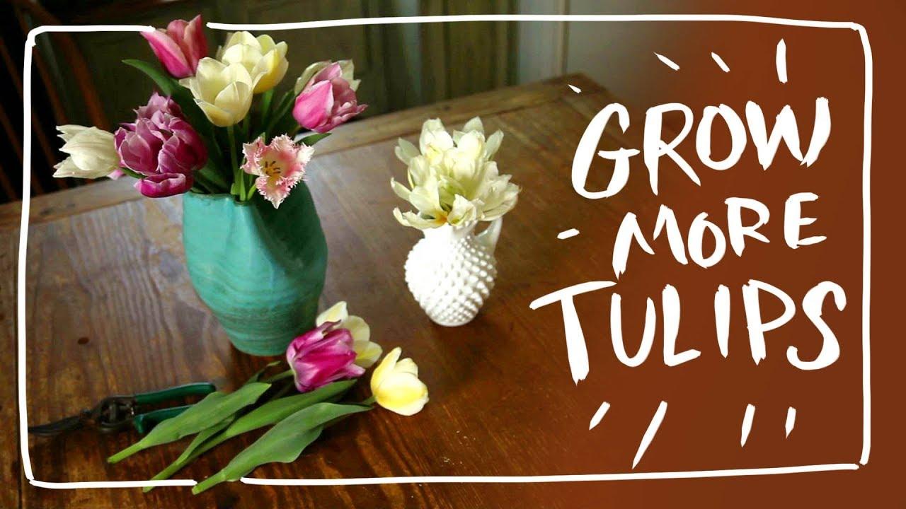 Secret To Multiply Tulips Youtube