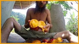 MANGO BLISS: NOTHING COMPARES TO HIGH QUALITY SUGAR DRIPPING RIPE MANGO