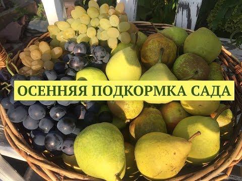 видео: Осенняя подкормка сада. Заправляем грядки. Программа Дачные сезоны 15.09.18.