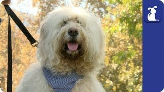 How Does Your Dog Show You It Loves You? - Dog Park Confessions