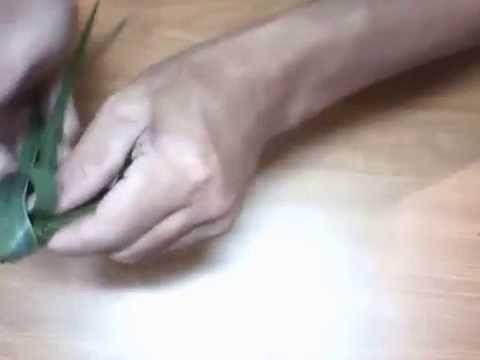 xếp lá dừa hình con cào cào