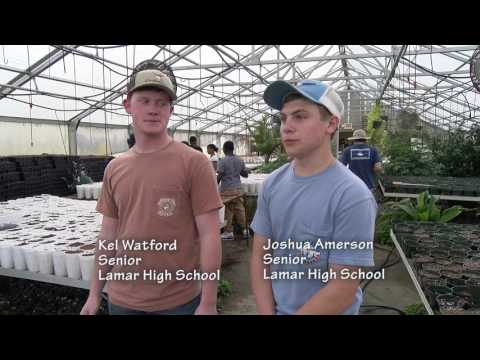 Darlington County Institute of Technology - American Chestnut Tree Conservation