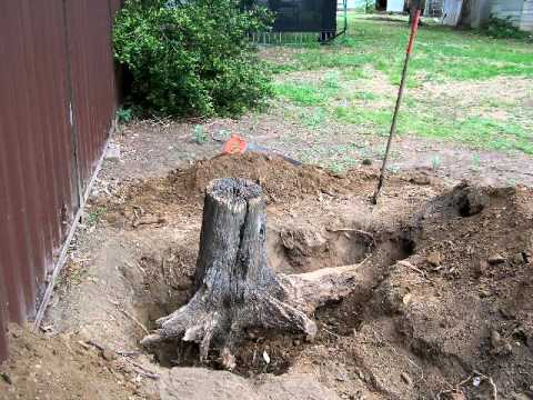 Tree Stump Removal Youtube