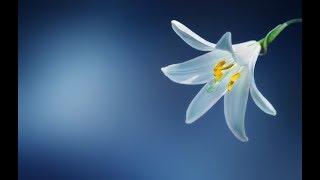 A Chant for INNER HAPPINESS | Anand Bhayaa Meri Maye | Mantra Meditation Music
