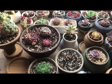 Beijing Succulents Update