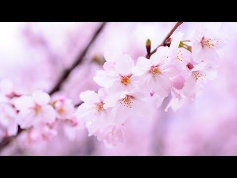 Morning Relaxing Music - Chinese Zen Meditation Music, Stress Relief (Carmen)