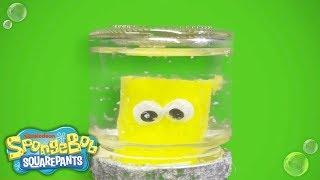 SpongeBob SquarePants | Holiday Snowglobe DIY | Nick
