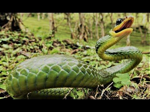 Die gefährlichsten Wassertiere des Amazonas Doku
